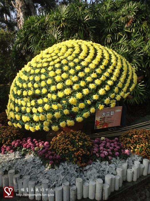 201211121-台北士林官邸菊展 (2)-2