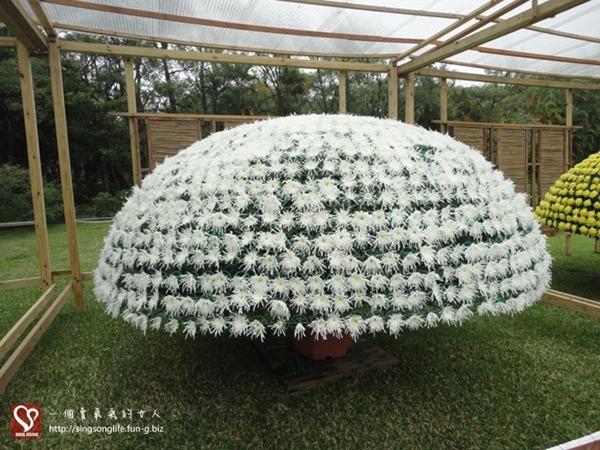 201211121-台北士林官邸菊展 (3)-2